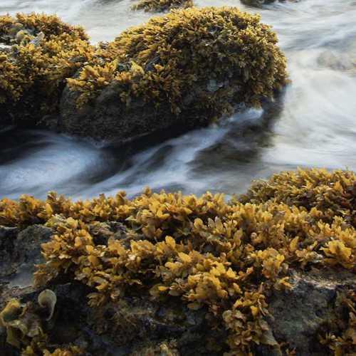 coarse screen - seawead - Hubert